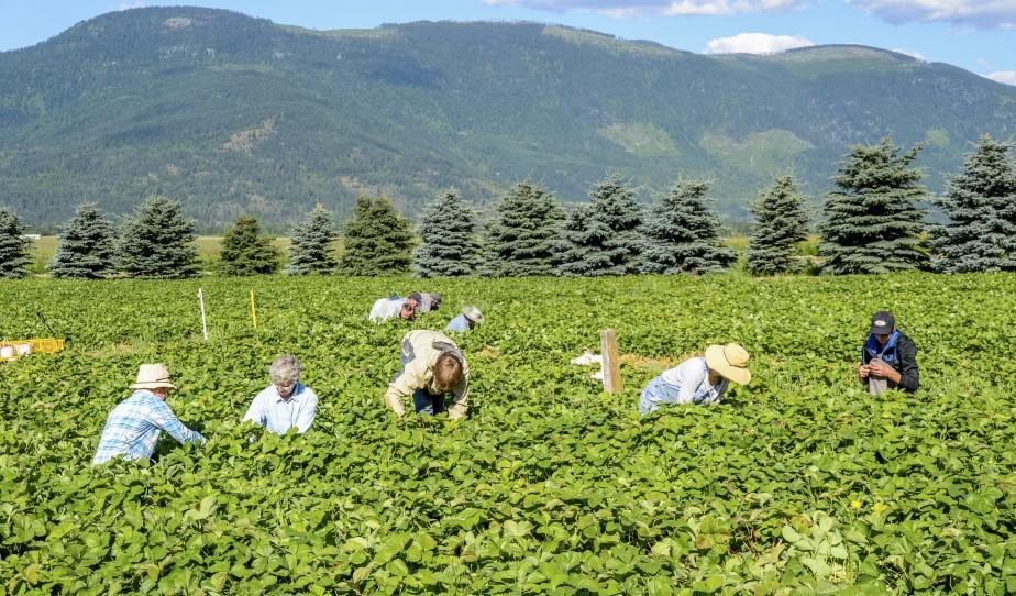 Job Posting: Community Liaison – Fields Forward